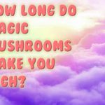 How Long Do Magic Mushrooms Make You High