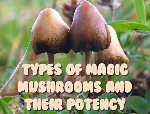 Types Of Magic Mushrooms And Their Potency