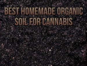 Best Homemade Organic Soil For Cannabis