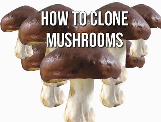 How To Clone Mushrooms