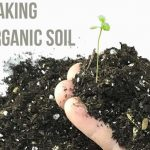 Making Your Own Organic Soil