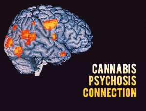 Cannabis psychosis connection