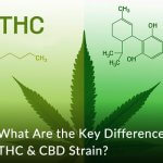 What Are the Key Differences of THC & CBD Strain?