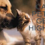 Cannabis and your pets – can they get high?