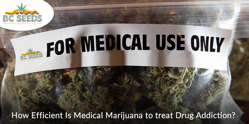 How Efficient Is Medical Marijuana to treat Drug Addiction