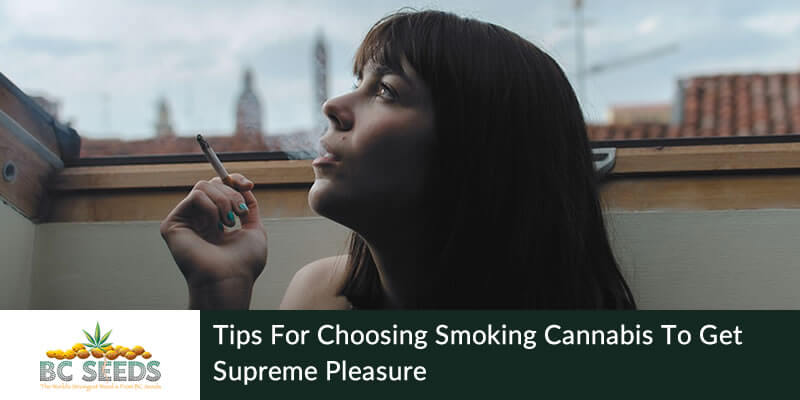 Tips for choosing smoking cannabis to get supreme pleasure