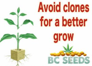 Avoid clones for a better grow