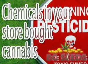 Chemicals in your store bought cannabis