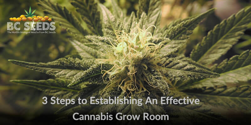 3 Steps to Establishing An Effective Cannabis Grow Room