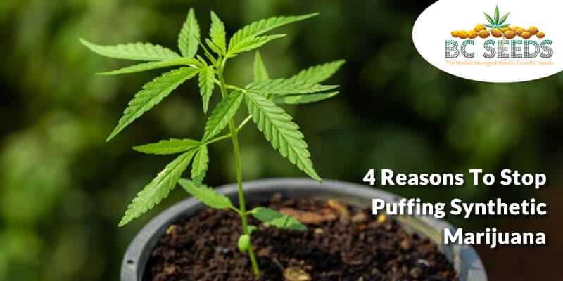 4 Reasons To Stop Puffing Synthetic Marijuana