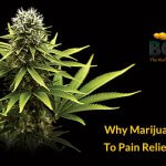 Why Marijuana Is The Key To Pain Relief For Seniors?