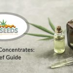 Cannabis Concentrates A Brief Guide