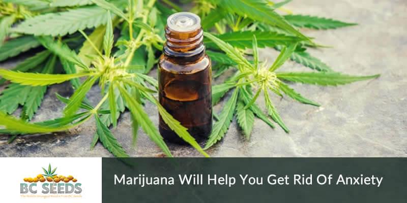 Marijuana will Help you Get Rid Of Anxiety