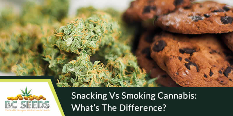 Snacking Vs Smoking Cannabis What's The Difference