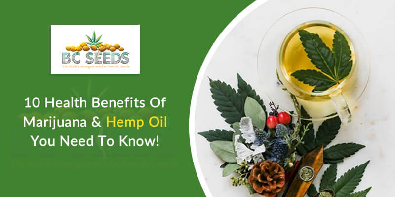 10 Health Benefits Of Marijuana & Hemp Oil You Need To Know!