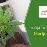 5 Tips to Grow a Better Marijuana Plant