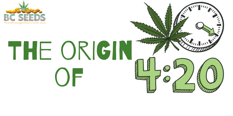 The origin of 420 | BCSeeds