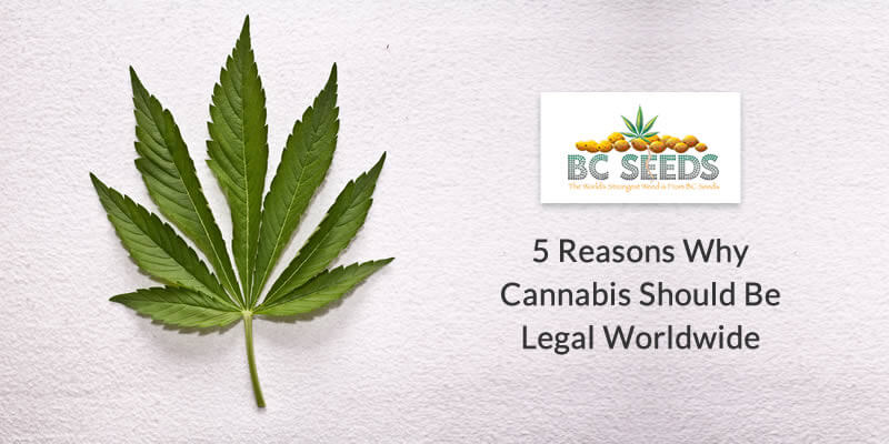 5 Reasons Why Cannabis should be Legal worldwide