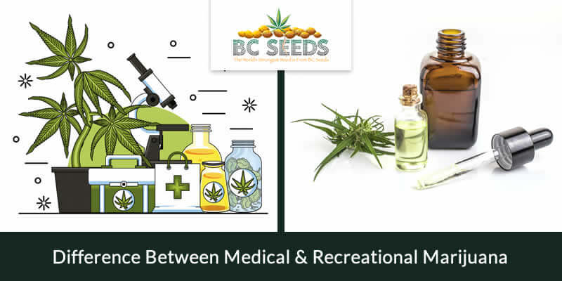 Difference Between Medical & Recreational Marijuana