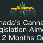 Canada's cannabis legislation almost 12 months on
