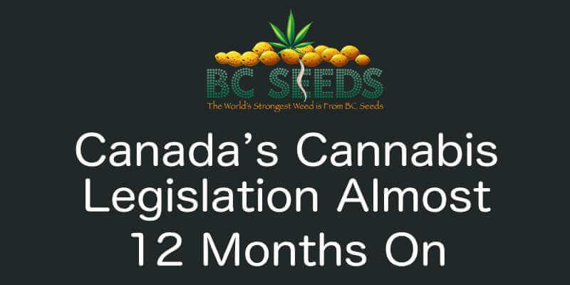 Canada's cannabis legislation almost 12 months on