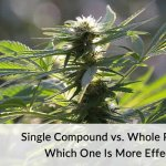 Single Compound vs. Whole Plant CBD Which One Is More Effective