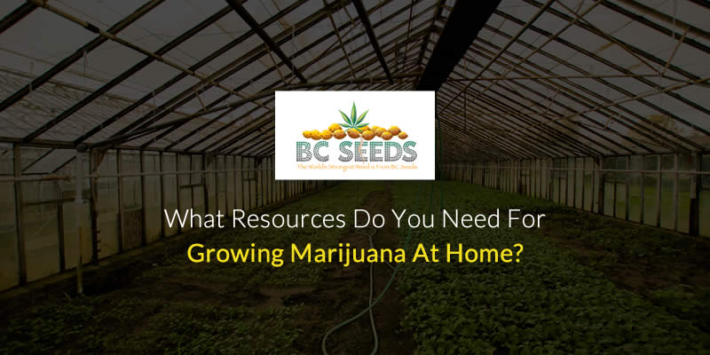 What Resources do You Need for Growing Marijuana at Home