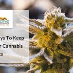 6 Effective Ways To Keep Pests Off Your Cannabis Plants