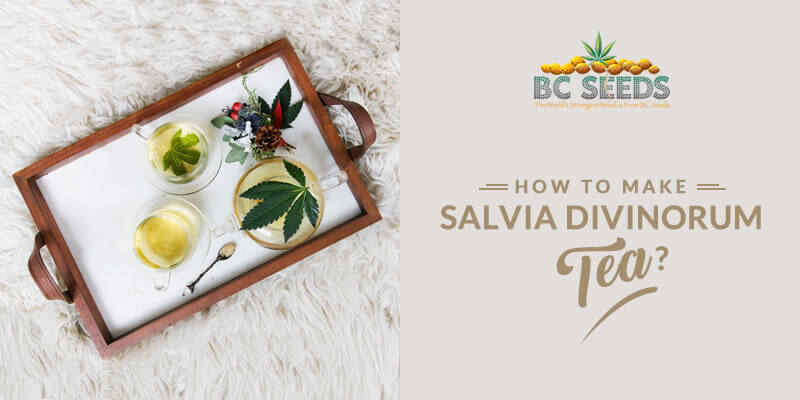 How To Make Salvia Divinorum Tea