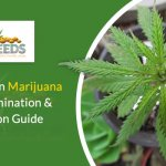 Whiteflies On Marijuana Plants Elimination & Prevention Guide