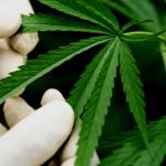 How To Grow Cannabis Discreetly?