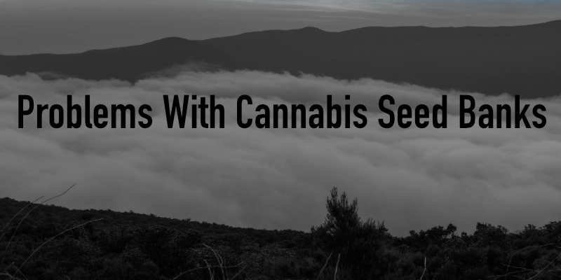 Problems With Cannabis Seed Banks
