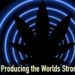 The Costs of Producing the Worlds Strongest Strains