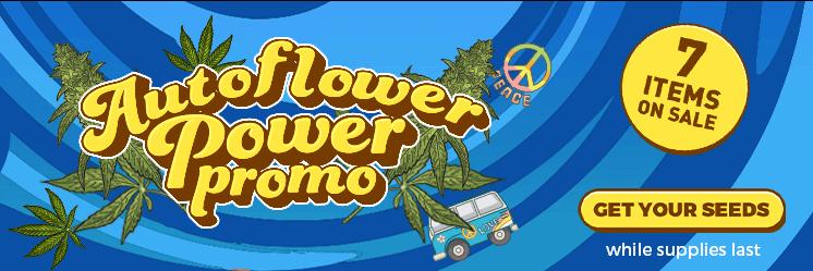 Auto Flowering Promo June 2021
