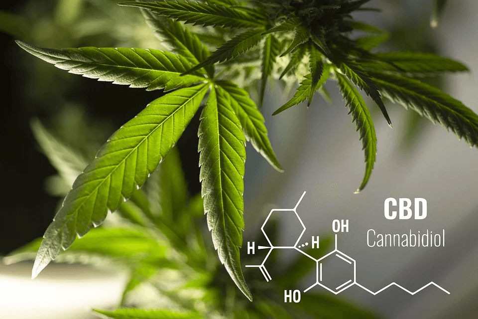Cannabinoids and Their Properties