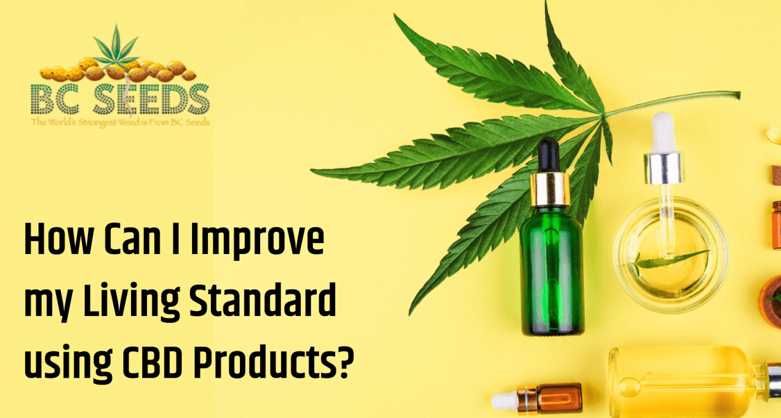 Tips to Improve Your Living Standard using CBD Products