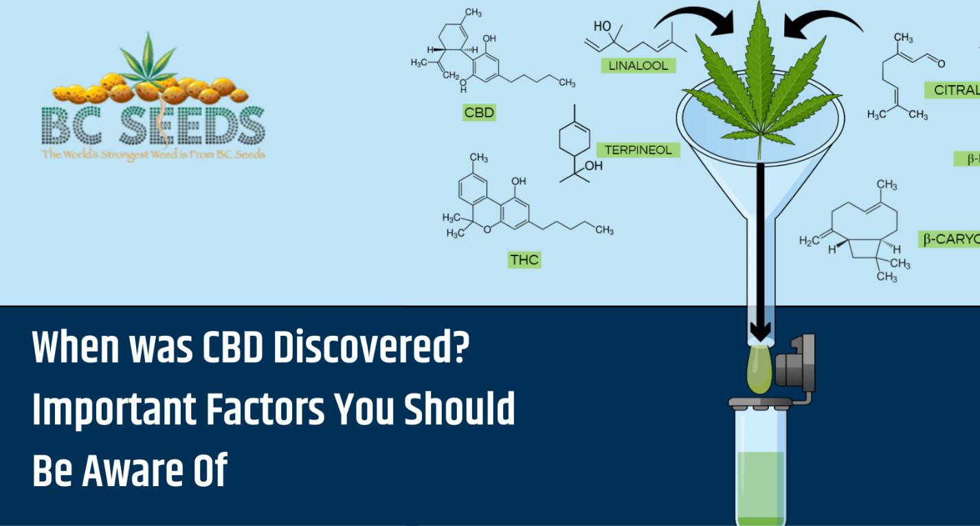 Important Factors about CBD